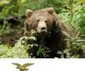Arrestato l'uccisore dell'orso in Abruzzo