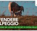 ESCURSIONE IN LESSINIA: DIFENDERE L'ALPEGGIO