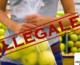 Io sono legale, come riconoscere i sacchetti per la spesa legali